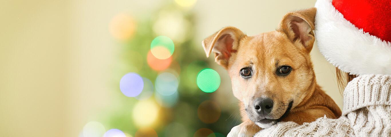 medaille chien sion Bien choisir  plaque identification pour chien