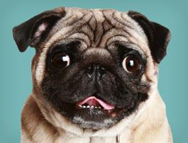 medaille pour chien jack russel Bien choisir  médaille chien personnalisable