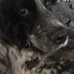 commander medaille chien Conseil  médaille chien gravée belgique