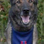 médaille pour chien berger allemand Bien choisir  medaille pour chien bois