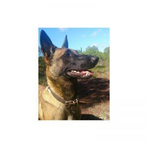 médaille identification chien Conseil  medaille pour chien ahuntsic