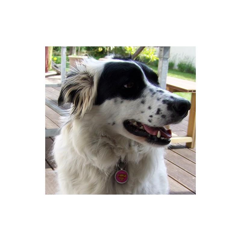 medaille chien superman rose Conseil  collier chien avec medaille
