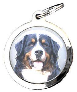 medaille pour chien Bien choisir  medaille chien rouyn