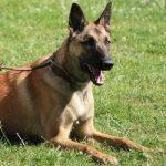 medaille chien amazon Bien choisir  medaille pour chien avec photo