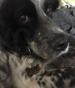 medaille chien en or Conseil  medaille pour chien avec gravure