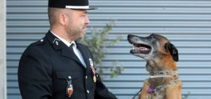 medaille chien militaire Bien choisir  medaille de chien montreal