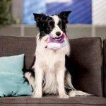 medaille pour chien border collie Bien choisir  medaille chien plexiglas