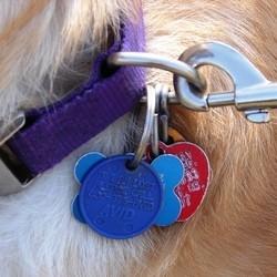 medaille chien terrebonne Bien choisir  médaille chien avec photo