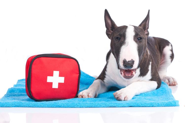 Avez-vous une trousse de premiers soins pour animaux de compagnie?