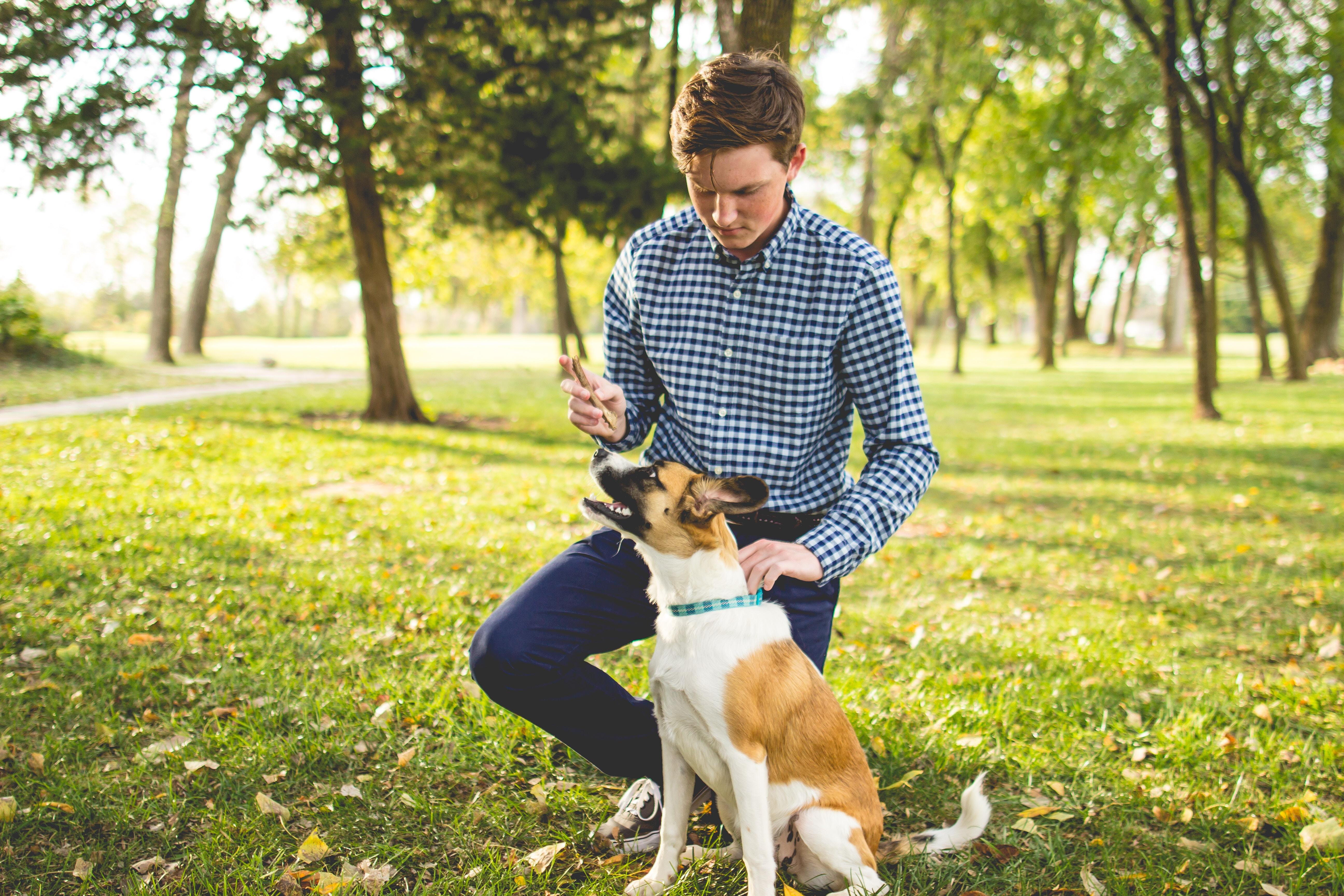 Comment créer un lien avec un chien de sauvetage adulte