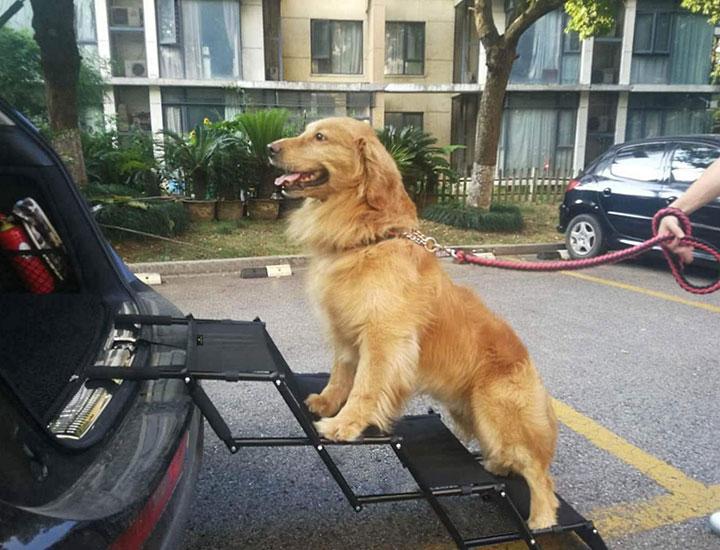 rampe vol-voiture-chien &quot;class =&quot; wp-image-2182 &quot;srcset =&quot; https://chiens-de-sport.com/wp-content/uploads/2019/04/1555398665_267_5-meilleures-rampes-pour-voitures-camions-pour-chiens-en.jpg 720w, https : //outdoordogworld.com/wp-content/uploads/2019/03/flightbird-car-dog-ramp-266x203.jpg 266w, https://outdoordogworld.com/wp-content/uploads/2019/03/flightbird- car-dog-ramp-530x405.jpg 530w, https://outdoordogworld.com/wp-content/uploads/2019/03/flightbird-car-dog-ramp-132x101.jpg 132w &quot;tailles =&quot; (largeur maximale: 720px) 100vw, 720px &quot;/&gt;</figure> </div> <p>La rampe pour animaux de compagnie Flightbird comprend un cadre métallique en quatre étapes qui s&#39;ouvre et se ferme comme un accordéon pour un rangement et un voyage faciles. </p> <p>Les marches sont fabriquées en tube métallique rigide et en tissu résistant, ce qui en fait un support résistant et convivial pour les pattes du chien. </p> <p>Bien que la rampe pèse moins de 10 lb, elle est suffisamment solide pour les gros chiens pesant jusqu&#39;à 100 lb. Sa pince en caoutchouc à la base et son mousqueton de sécurité au sommet garantissent la stabilité de votre chien.</p> <p><strong>Poids de la rampe:</strong> 10 lb</p> <p><strong>Capacité de la rampe:</strong> 100 lb</p> <p><span class=