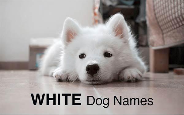Noms de chien: d'excellentes idées pour nommer votre chiot  – Médaille personnalisée pour chiens