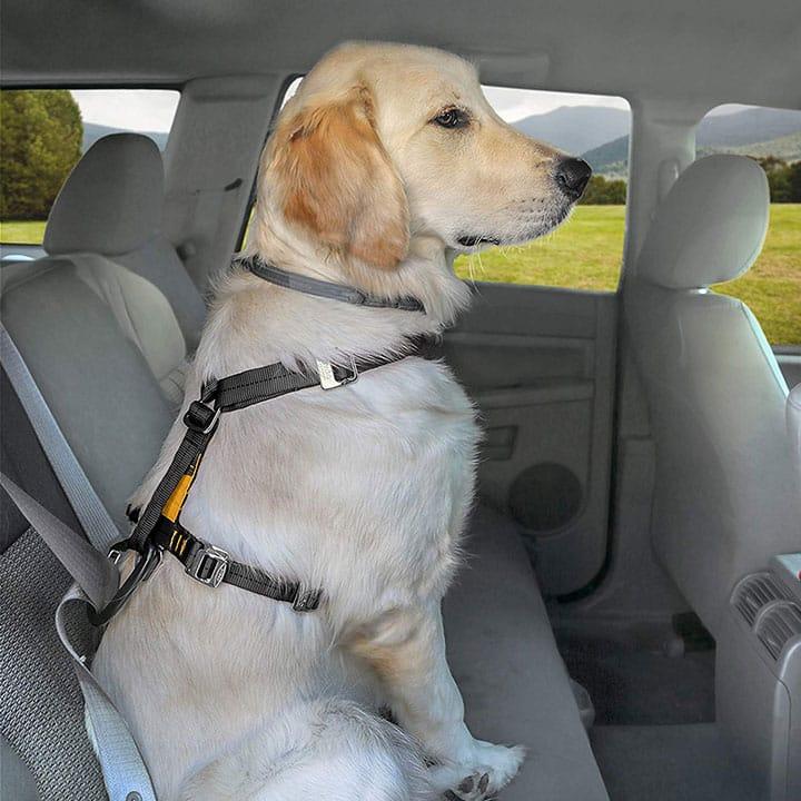 5 meilleurs harnais de voiture (et ceintures de sécurité) pour chiens  – Médaille personalisée