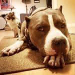 Abuser des chiens | Le blog de la bonne vie de chien  – Médaille chien