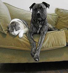 Animal de compagnie – Wikipedia  – Médaille pour collier