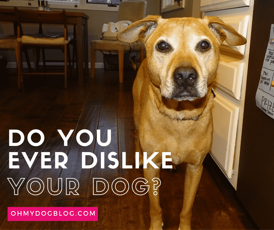 Avez-vous déjà détesté votre chien?  – Médaille personalisée