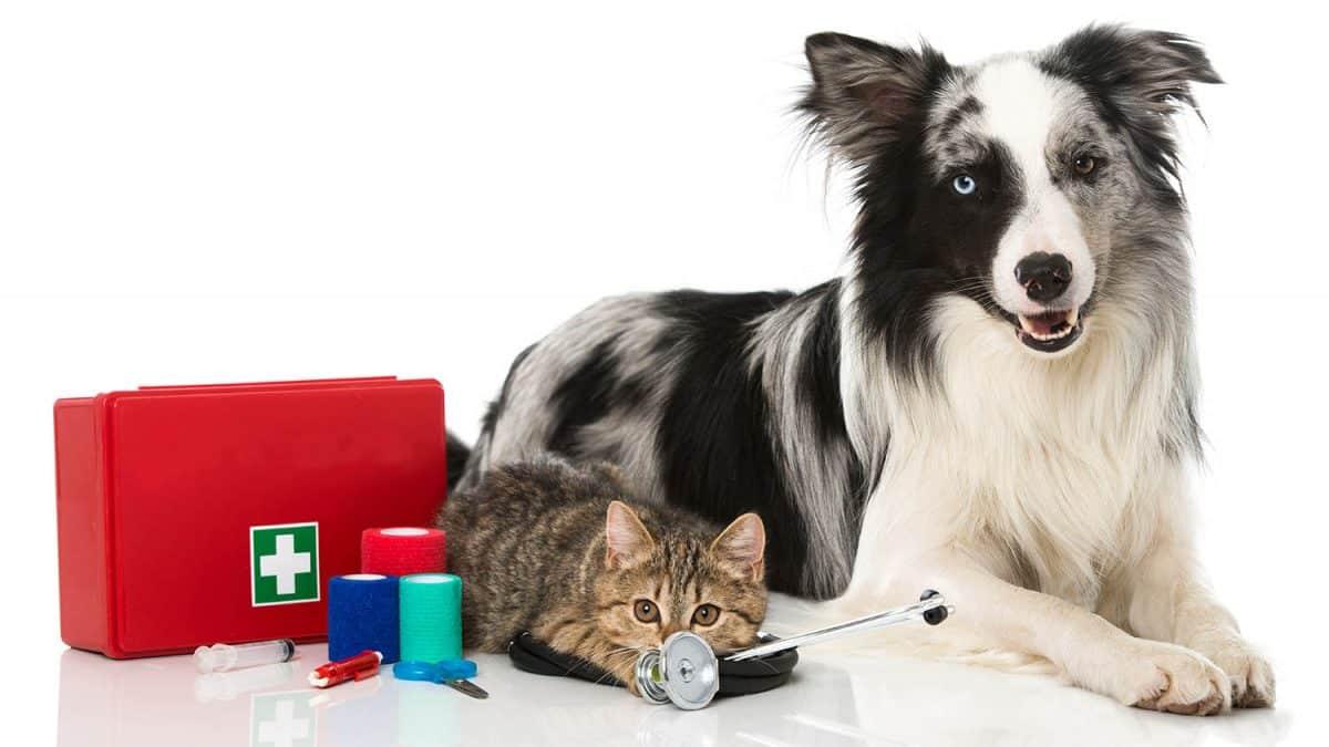 Avez-vous une trousse de premiers soins pour animaux de compagnie?  –  Médaille personalisée