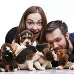 Comment célébrer la journée nationale des chiots  – Médaille chien