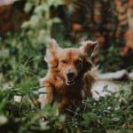 Comment empêcher votre chien de se perdre: Journée de sensibilisation aux chiens perdus  – Médaille chien