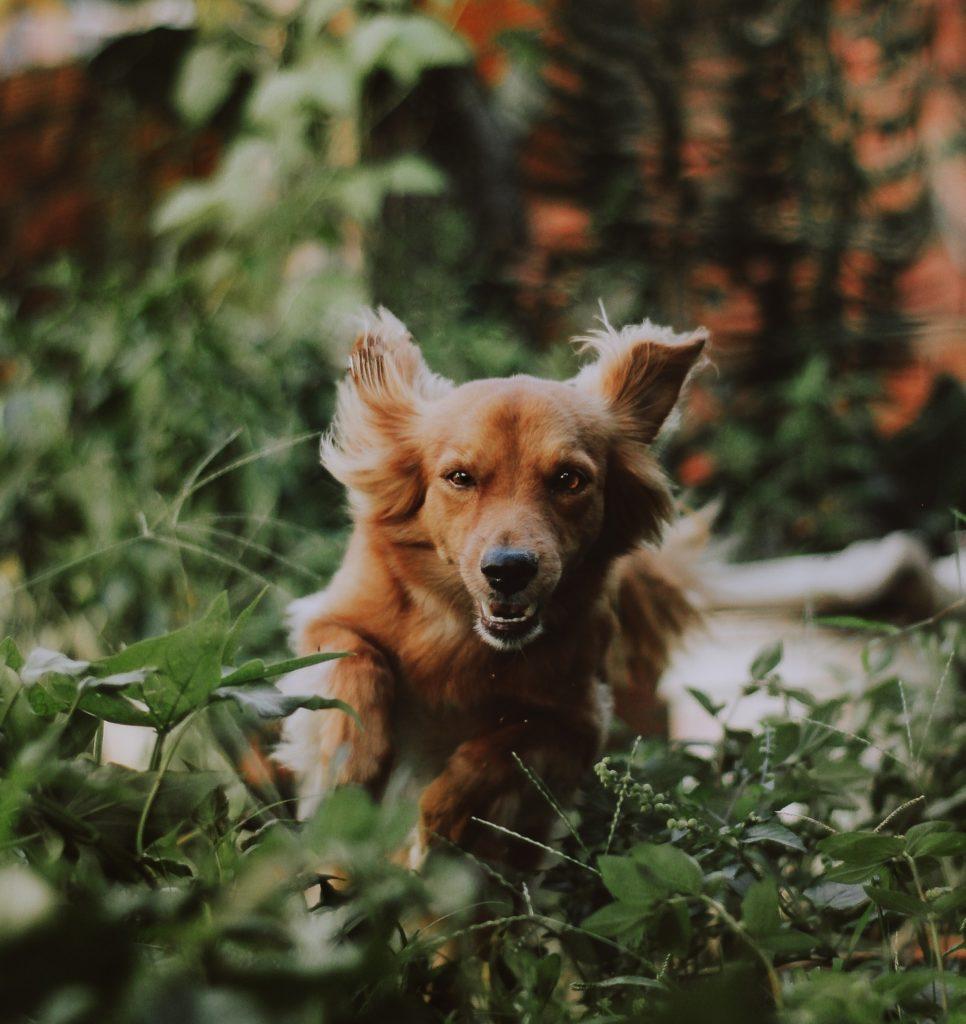 Comment garder votre chien de se perdre