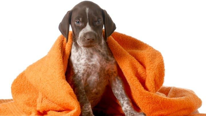 Médaille chien medaille chien sur mesure