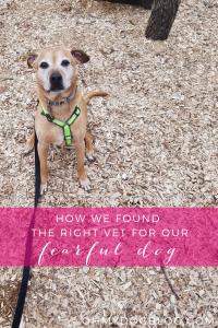 Comment nous avons trouvé le bon vétérinaire pour notre chien réactif  – Médaille personalisée