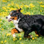 Dog Food Insider – Critiques, Comparaisons et Évaluations de Nourriture pour Chien!  – Médaille pour collier