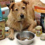 DogAware.com: aliments pour chiens commerciaux  – Médaillon pour chien