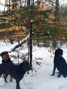 Dr Amanda Glew: Résolutions du Nouvel An  – Médaille chien gravée