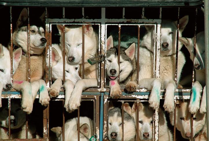 Jerome Flynn demande aux fans de «Game of Thrones» d'arrêter d'acheter des Huskies de loups-garous  – Médaille pour collier