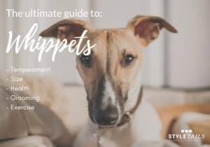Le guide ultime pour posséder un whippet  – Médaille chien