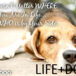 Leçons de Lilly | Vie et chien  –  Médaille pour collier