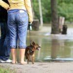 Liste de contrôle de préparation aux situations d'urgence pour les chiens  – Médaille chien