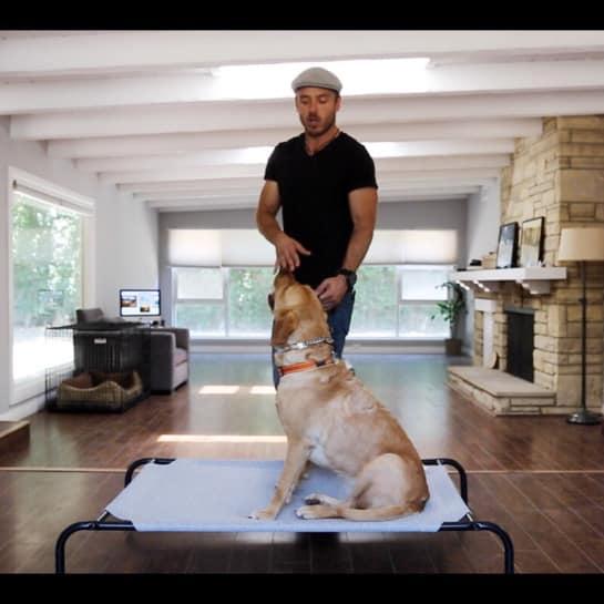 Médaille chien harnais chien guide