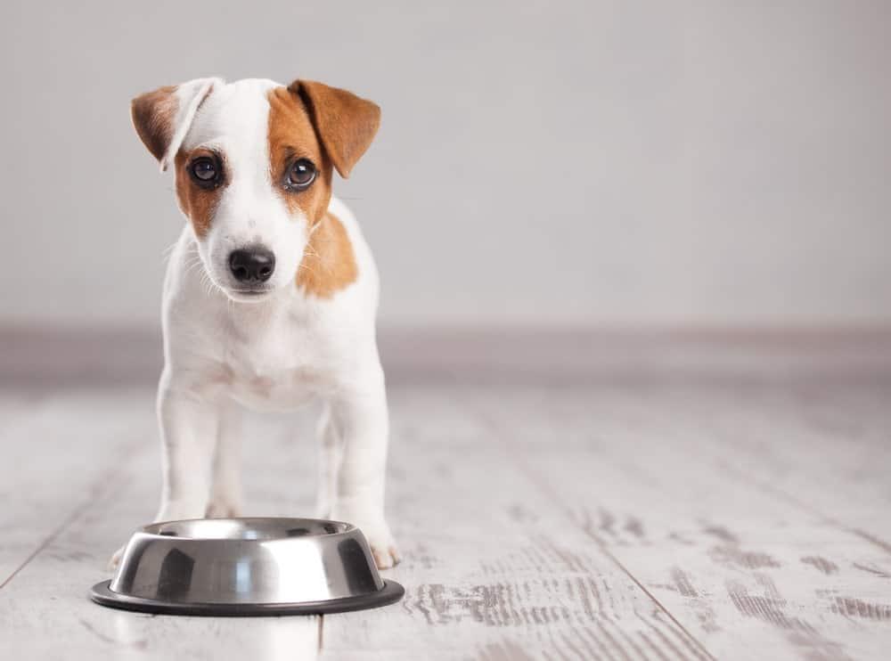 Nous sommes ce que nous mangeons mange: nos animaux domestiques reflètent la crise de la santé humaine  – Médaille chien gravée