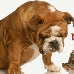 Pourquoi devriez-vous cesser de nourrir votre chien?  – Médaillon pour chien