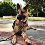 Prendre des photos en thérapie | Le blog de la bonne vie de chien  –  Médaille personalisée