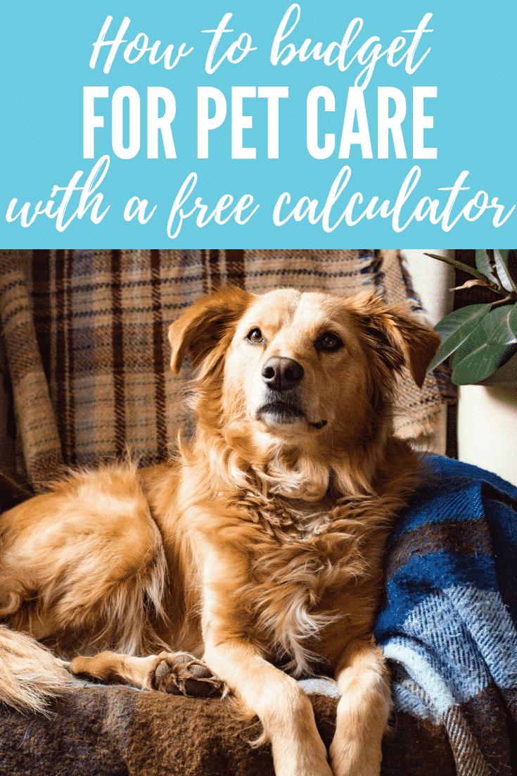 Quel est le coût réel de la possession d'un chien? Conseils pour budgétiser les soins pour animaux de compagnie (y compris un outil de budget GRATUIT pour les soins de vos animaux  – Médaille personnalisée pour chiens
