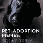 Quels mèmes d'adoption d'animaux se trompent  – Médaillon pour chien