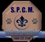 medaille de chien montreal Bien choisir  medaille pour chien avec photo