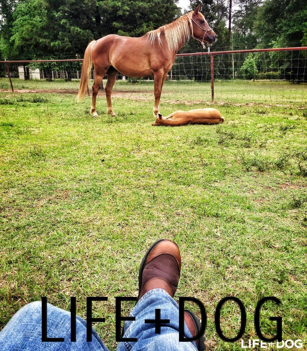 Médaille chien longue laisse pour chien