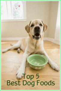 Top 5+ des aliments pour chiens: Les meilleurs aliments pour chiens examinés pour 2018  – Médaille pour collier