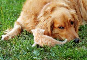 Top 7 des races de chiens qui peuvent vivre calmement avec des chats  –  Médaille personalisée