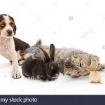 Zoonoses d'animaux domestiques autres que les chiens, les chats et les oiseaux  – Médaillon pour chien