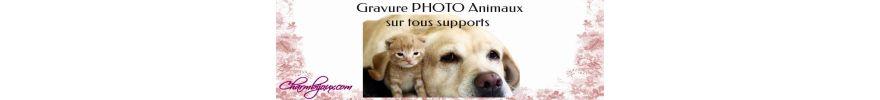 Profitez de la Saint Valentin avec vos animaux de compagnie  – Médaille chien gravée