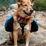 Comment randonner avec des chiens et des chats: Un guide  – Médaille chien