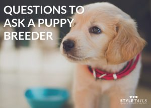 6 questions à poser à un éleveur de chiots  – Médailles chiens