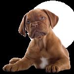 Chiens à adopter | Pets4Homes UK  – Médailles chiens