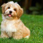 Chiots et chiens à vendre à CT  – Médaille personnalisée pour chiens