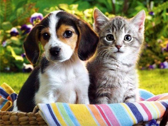 Joli chiot et chat d'Izismile
